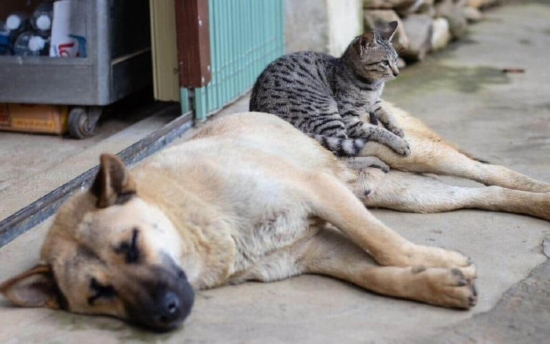 What-are-the-personality-differences-between-dog-and-cat