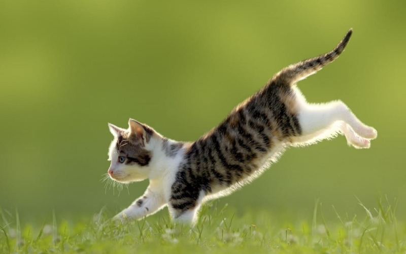 Why-do-Cats-always-land-on-their-feetWhy-do-Cats-always-land-on-their-feet