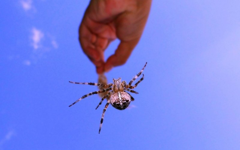 Why-do-some-people-fear-spiders