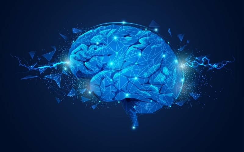 Female-and-Male-Brains-Operate-Differently-at-Molecular-Level