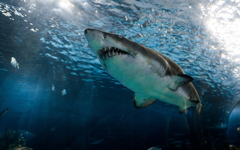 How-to-Evade-a-Shark-Attack