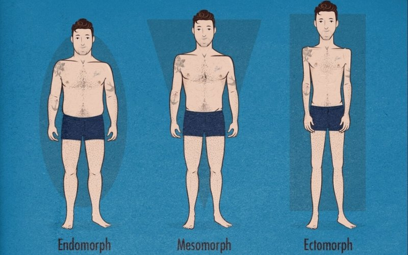 What-are-the-characteristics-of-an-ectomorph-body