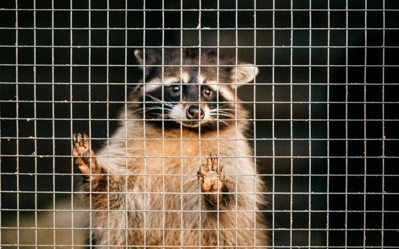 Why-are-zoos-bad-for-animals