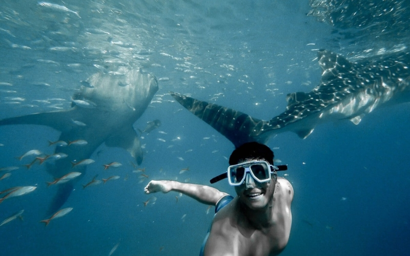 Why-do-sharks-attack-humans