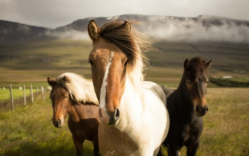 How Are Ponies and Horses Different?