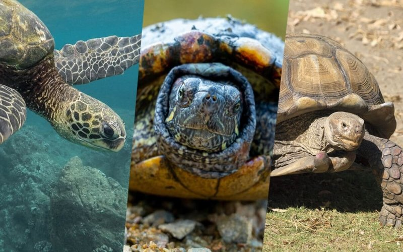 What's the difference between Turtles, Tortoises, and Terrapins?