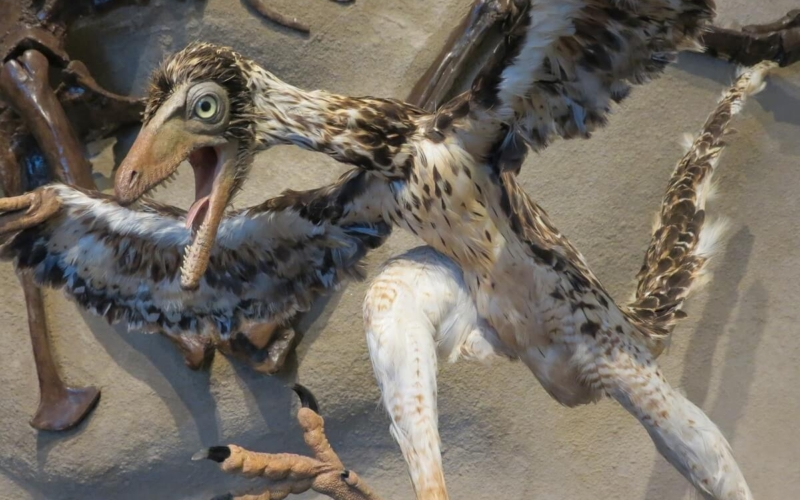 Why Did the Archaeopteryx Become Extinct?