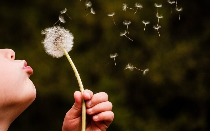 Why Do People Wish on Dandelions?