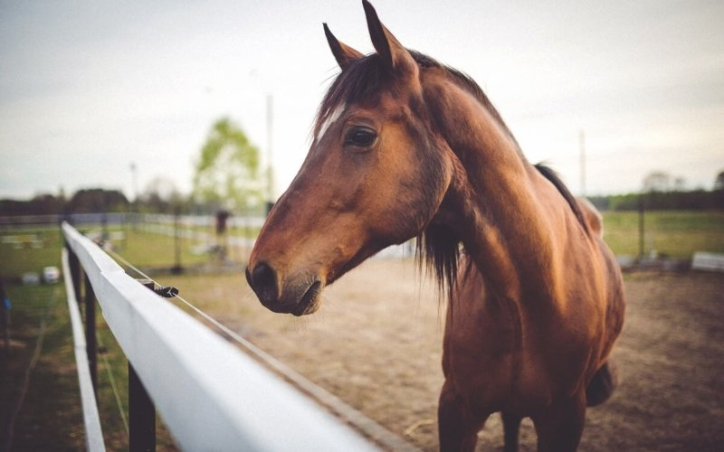 How much does it cost to buy a horse?