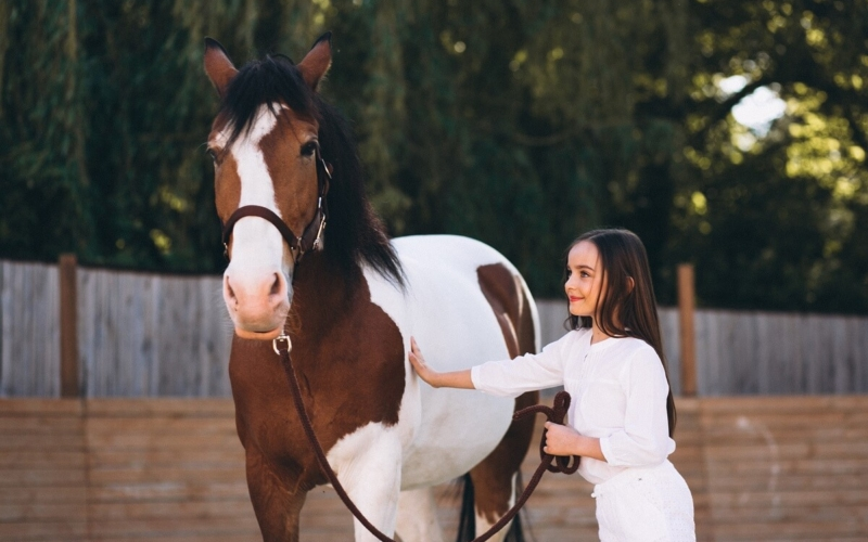 How Much Does It Cost To Own A Horse?