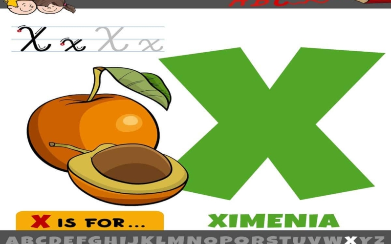 What are Food that Start with the Letter X?