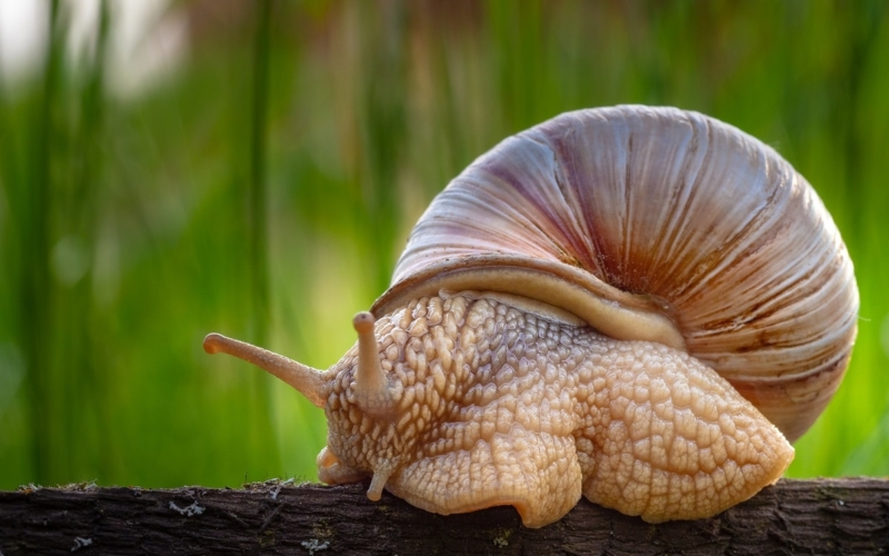 15 Types of Snails and Facts about Them